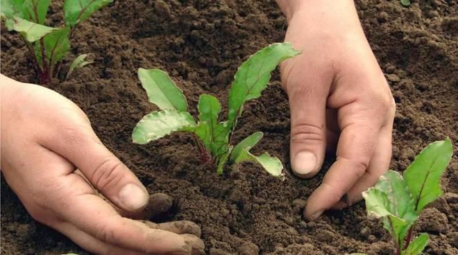 Vico Equense. Da domani riattivata la vendita di piantine da orto, semi e fiori