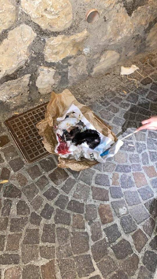 gattini rifiuti capri