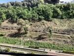 Castellammare Varano disboscamento