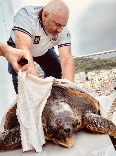 Salerno, Capitaneria di Porto: suggestivo salvataggio di una tartaruga marina