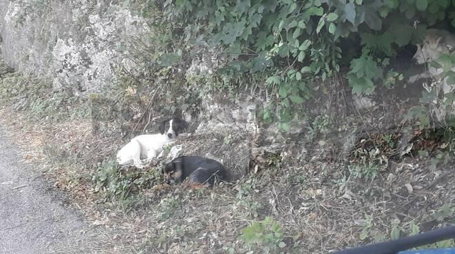 valico di chiunzi cani abbandonati enpa costa d'amalfi