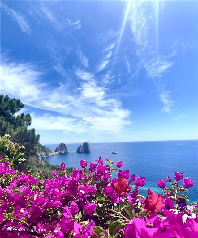 Capri. I Faraglioni circondati dalle Buganvillea, la foto è una cartolina