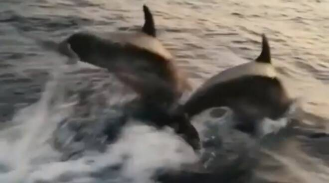 delfini positano