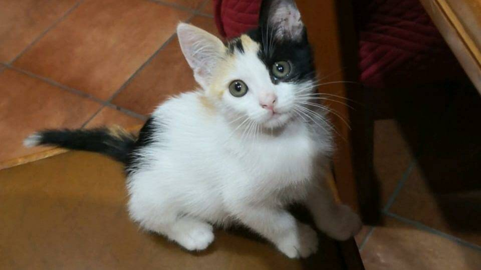 giornata internazionale gatto