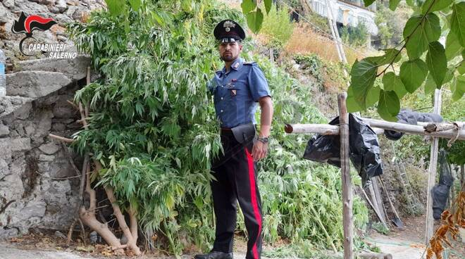 carabinieri ravello, sequestro cannabis