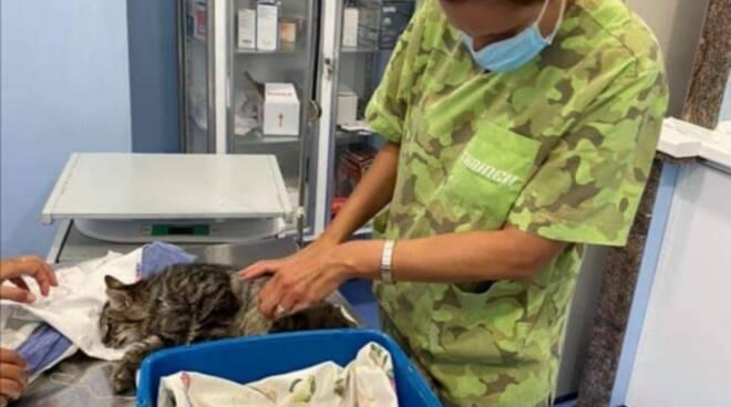 Gatto veterinario Positano