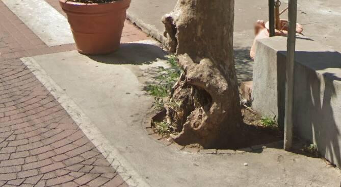albero positano via pasitea