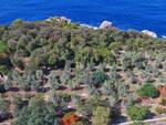 Capri. Ambiente: il Forum adotta il fondo Steinhart