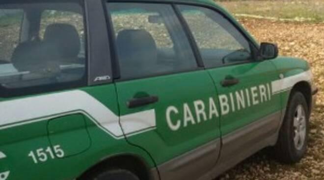 Controlli anti-bracconaggio dei carabinieri forestali a Giugliano e Poggiomarino (Napoli), due persone denunciate