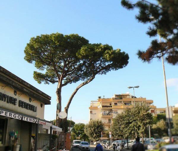 Riflessione sugli alberi del ministro Sergio Costa