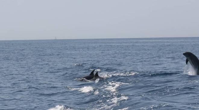 delfini punta campanella