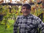 Raffaele Moccia, viticoltore eroico alle porte di Napoli