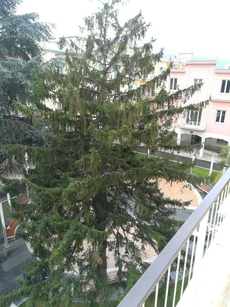 albero piazza vittorio veneto