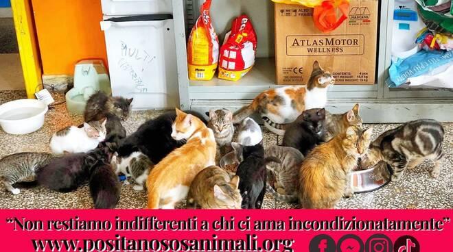 Calendario  animali