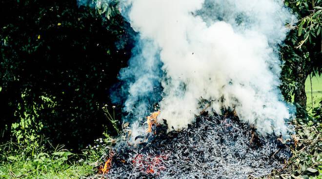 """Campania, è lotta dura al """"colpo di fuoco"""" delle pomacee: batterio Erwinia amylovora insediato nei comuni di Agerola e Scala"""