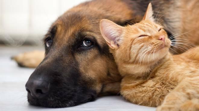 Multa fino a 10mila euro a chi affida il proprio animale d\'affezione a persona inadeguata