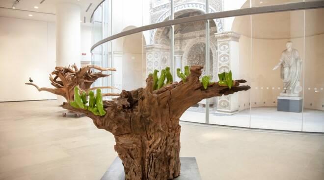 L\'arte in una radice. La mostra di Benedetto Pietromarchi