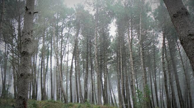 Domani è la Giornata Nazionale degli alberi, WWF: Storie di alberi in Italia e di persone che lavorano per la loro tutela!