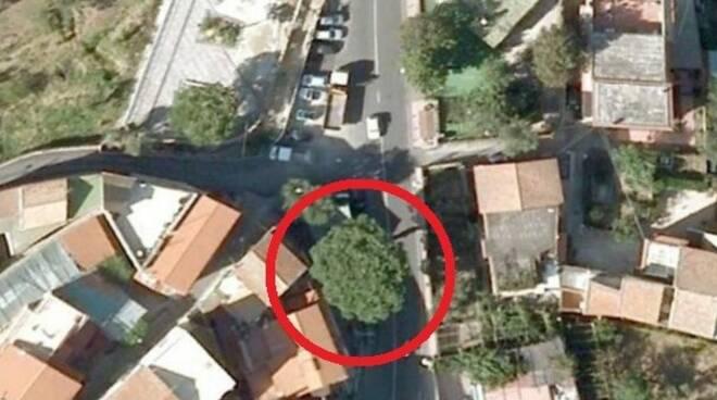 Sant'Agnello, un altro pino abbattuto: la denuncia del WWF