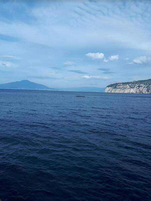 Sorrento, questa mattina un cetaceo all'estremità del porto