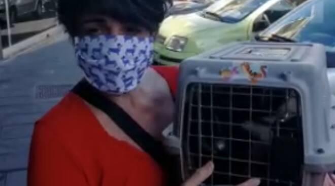 """Vico Equense. L'appello di Angela Esposito: """"Aiutiamo i cani del Faito"""""""
