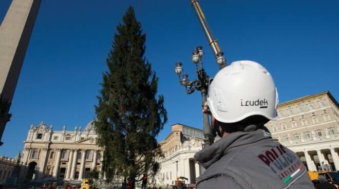 albero vaticano