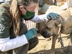 Perché salvare gli animali è anche salvare sé stessi Martina Pluda
