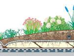 """Aiule spartitraffico con piante \""""mangia smog\"""" per città sempre più vivibili"""