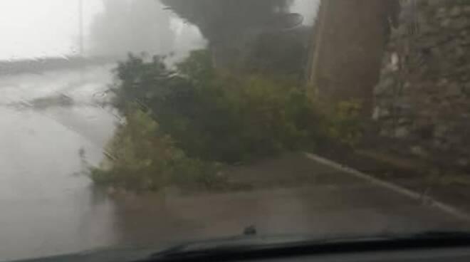 Maltempo a Scala, albero abbattuto dal vento: prestare attenzione nei pressi del ristorante Zi' Antonio