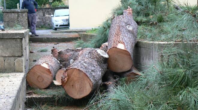Piano di Sorrento, l'intervento di Claudio d'Esposito dopo l'interrogazione del consigliere Mare sulle modalità di abbattimento degli alberi
