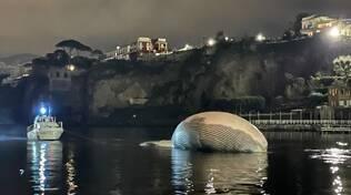 Balena a Sorrento