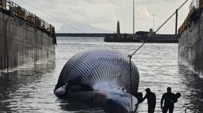 Balenottera comune il CERT continua ad aggiornarci rispondendo alle domande