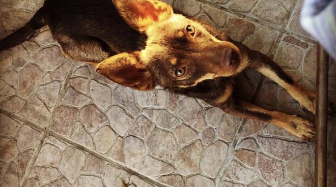 Cani scomparsi ad Agerola, richiesta di aiuto a Positanonews