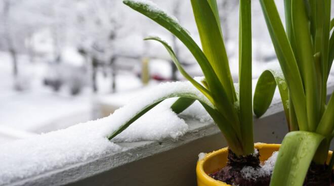 Come proteggere le piante dal freddo dell'inverno: consigli utili