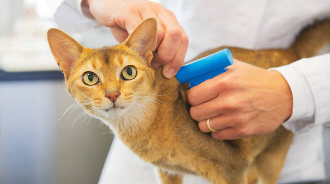 Microchip per gatti