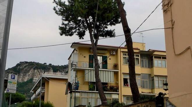 Piano di Sorrento: alberi abbattuti , il M5S presenta esposto in Procura contro il Comune