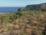 L'Oro di Capri celebra i suoi primi 7 anni di attività con un docu-video. L'attività dei soci prosegue adesso con la potatura