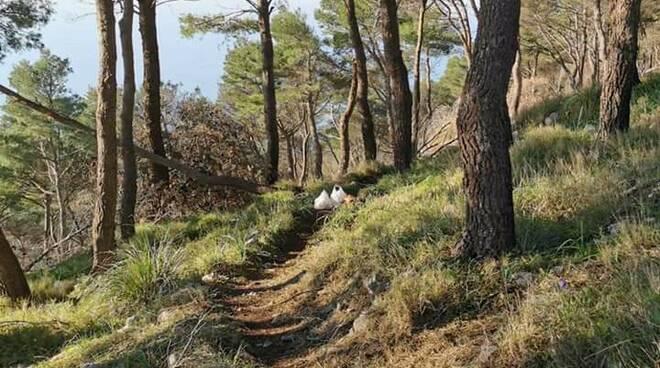 Massa Lubrense, pineta di Monte San Costanzo: il polmone verde diventa palestra a cielo aperto