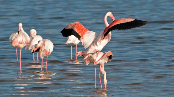 Oggi si festeggia la Giornata Mondiale delle Zone Umide