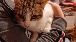 Penisola Sorrentina, l'appello: aiutiamo a salvare una gatta morsa da un cane