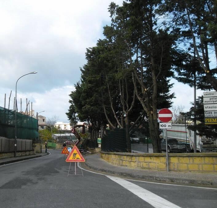Piano di Sorrento: tagliati gli alberi dell'isola ecologica