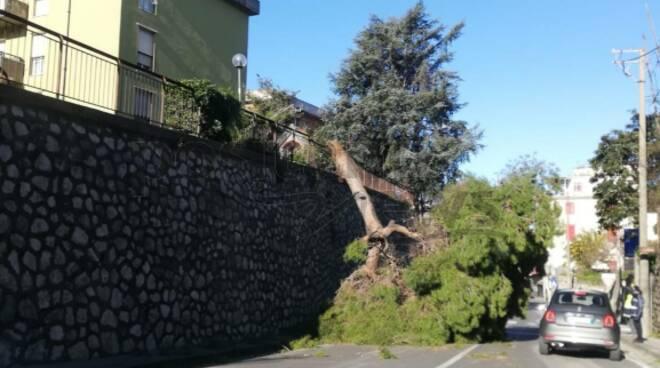 Piano di Sorrento vento forte cade albero a Mortora