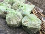 Sorrento: puliti gli arenili dai rifiuti spiaggiati a seguito del maltempo