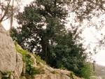 """Forest Day, WWF: Nelle foreste \""""antiche\"""" il futuro della biodiversità"""
