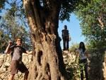 La Penisola Sorrentina in prima linea nel rimboschimento insieme al WWF