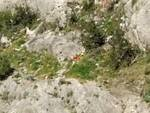 Maiori: rifiuti sul costone della spiaggia del Cavallo Morto