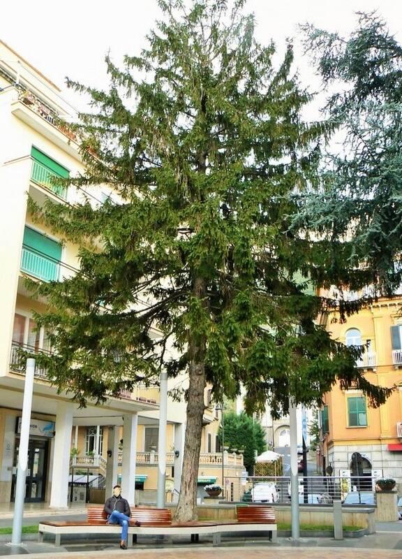 """Meta, addio all'albero di natale di piazza Vittorio Veneto, il comunicato del WWF: """"Un delitto premeditato da tempo"""""""