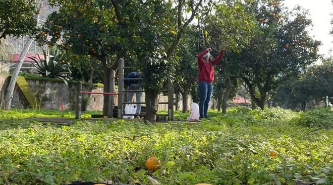 Meta, il forum dei giovani distribuisce agrumi alla comunità.