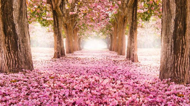 Oggi 20 marzo 2021 è l'Equinozio di primavera. Perché cambia data?