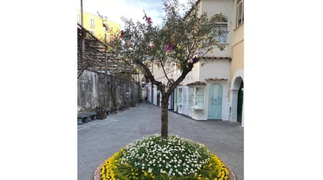 """Oggi è la Domenica delle Palme, a Positano preparato l'ulivo della speranza. Il sindaco: """"Manteniamo le nostre tradizioni"""""""